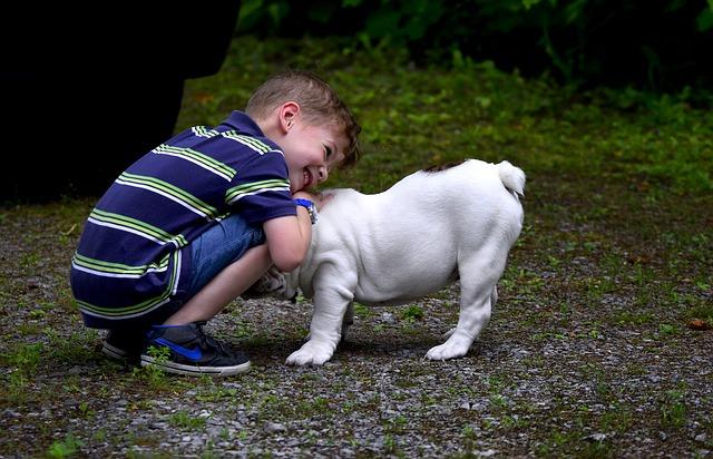 jak namówić rodziców na psa