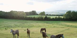 Czym powinien cechować się obóz jeździecki